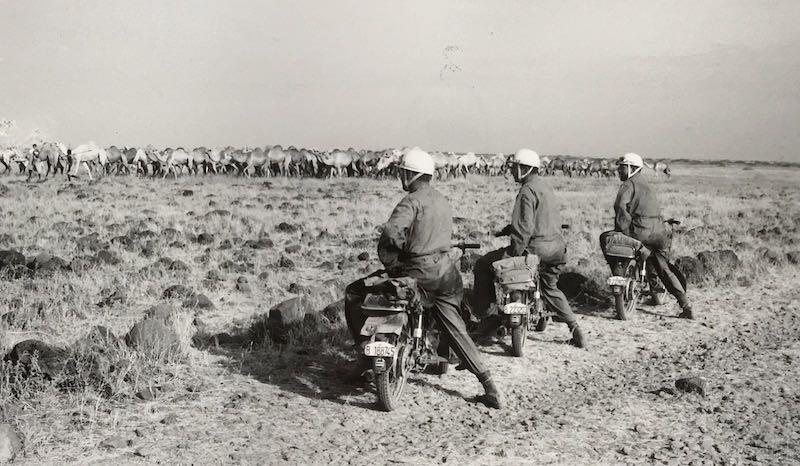 Rebaño de camellos en Etiopia